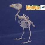 house sparrow skeleton