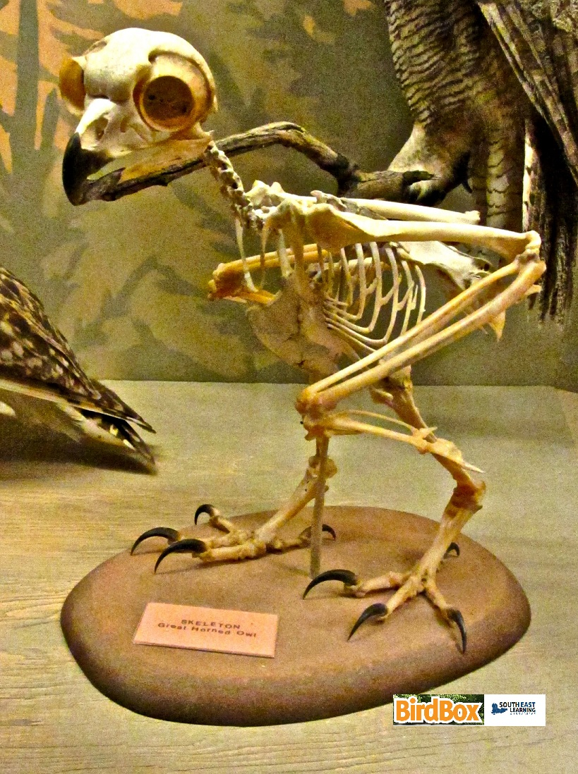Topic 3 – Skeletons and Muscles | See Nature | Observing ... - photo#9