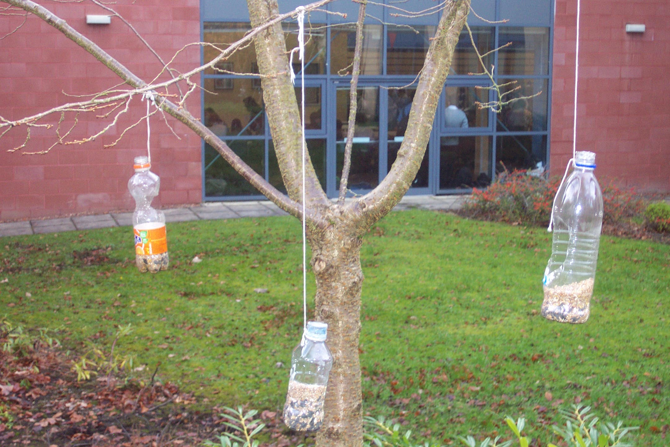 Topic 11 habitats situating new bird features see for How to make a bird feeder using a plastic bottle