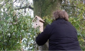 hanging a nest box in our school grounds 160315