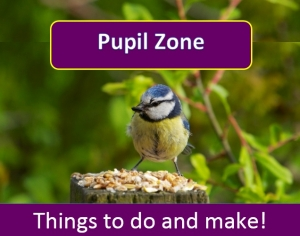 Pupil Zone image