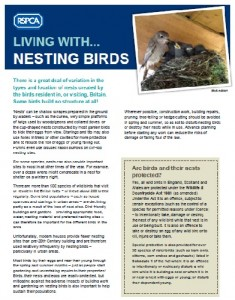 living with nesting birds