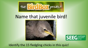 name that juvenile bird