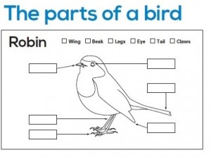click on the diagram to download and print this page and correctly label  the body parts of a robin