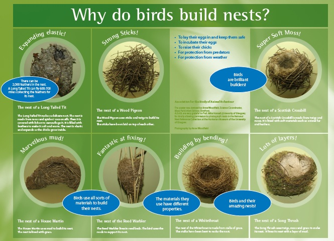 Activity 4 Building Bird Nests - Point Blue
