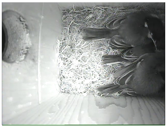Last night in nest 10.50pm.jpg